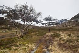 Lettgått terreng innover Grunnfjorddalen -  Foto: Trond Østvang