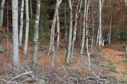 Ryddet sti gjennom tett skog - Foto: Ukjent