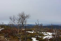 Utsikt underveis til toppen - Foto: Kathrine Kragøe, Innherred Reiseliv