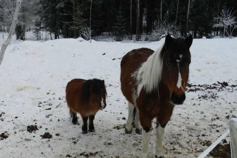 Hester, ponnier, rådyr og elg. Her kan du treffe mange dyreslag.
