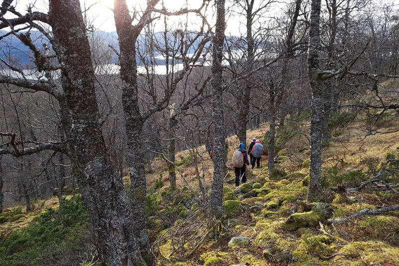 Fin lauvskog med mosegrodd skogbunn siste stykket ned til der turen starta