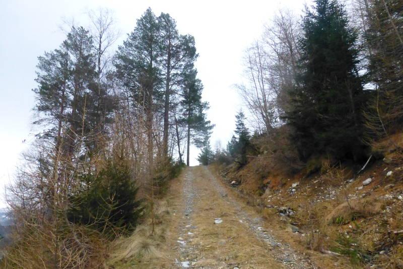 Fin skogsveg heilt til setrevollen