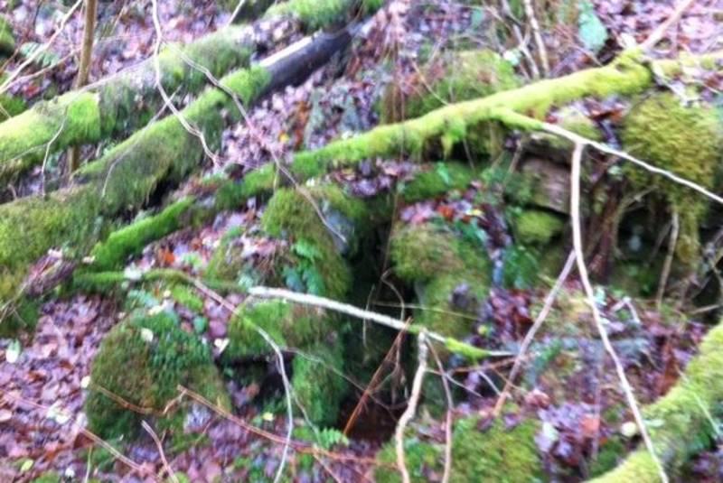 Gammel skog med vannoppkomme