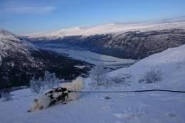 Glad hund ein kald vinterdag - Foto: Åshild Myhre Amundsen
