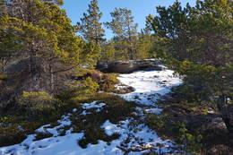 Fin kystfuru i lettgått terreng - Foto: Kjell Fredriksen