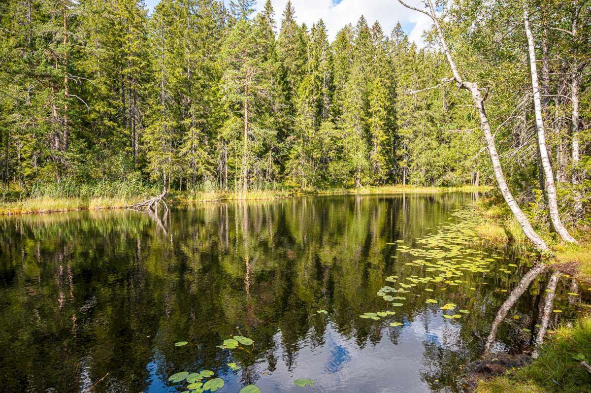 Øvre Blanksjø ligger flott til i skogen