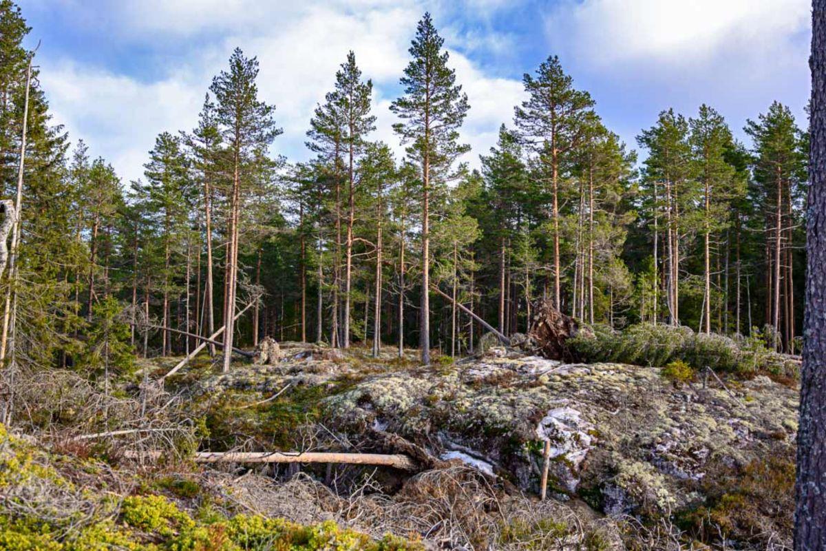 Fint skogsterreng