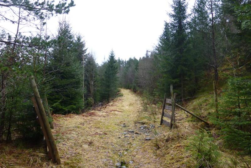 Fin skogsveg. Utgangspunkt ved Storevik