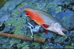 Tyssevatnet har stor fisk - Foto: Ukjent