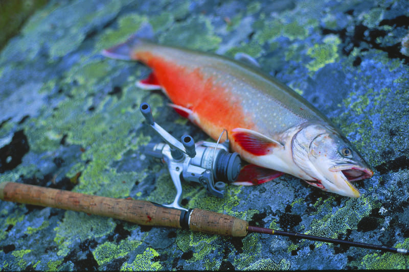 Tyssevatnet har stor fisk