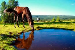 Hester som koser seg på Vesterås - Foto: Bjørn Chr. Tørrisen