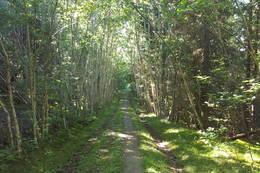Stien til Olstolen - Foto: Kathrine Kragøe Skjelvan