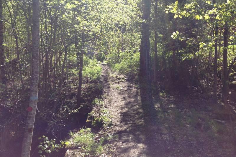Fin, blåmerket sti innover i skogen