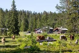 Gavlesjåstulen -  Foto: Ole Arvid Vassbotten