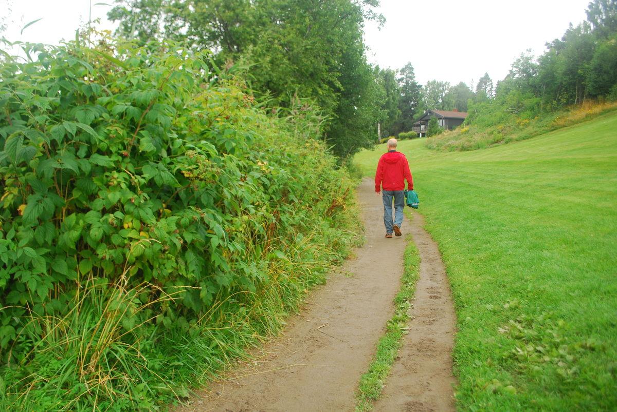 Er du heldig, finner du bringebær langs på turen. Det er masse bringebærkjerr langs turveien.