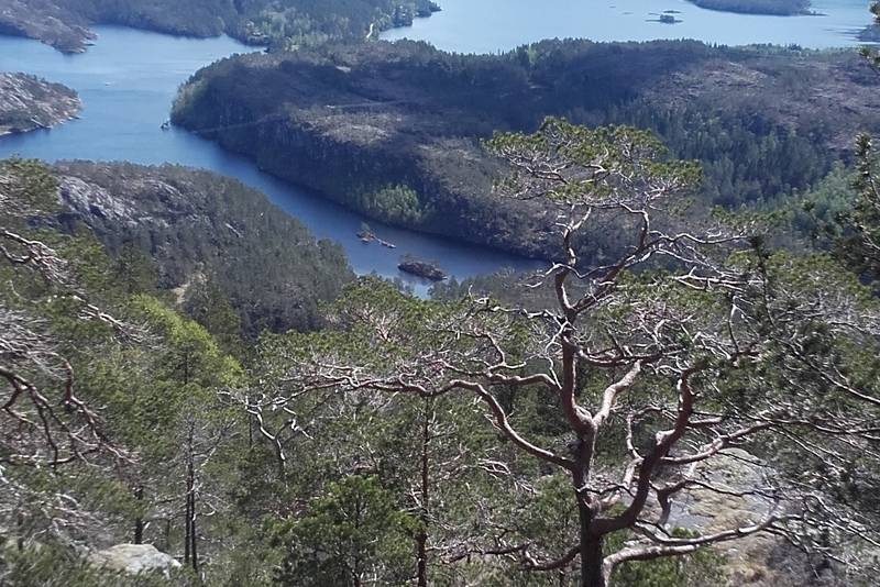Hamrane opp Stølsvegen, Sikt mot  Jagedalsvatnet (nærast til venstre) og Sagevik/Barlindbotn