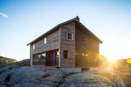 Gullhorgabu -  Foto: Andre Marton Pedersen