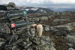 Høgenipa - Foto: Anne Cecilie Kapstad