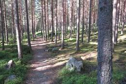Sti i trivelig skogmiljø -  Foto: Jørn Magne Forland