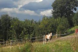 Hester på beite ved Dokkaløypa.  - Foto: Hilde Roland