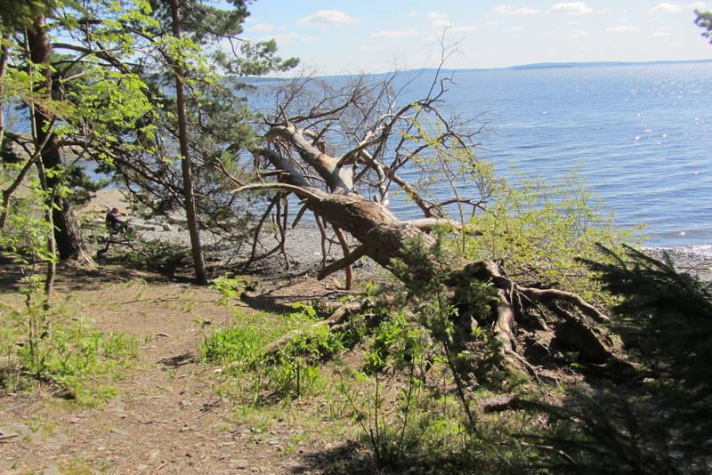 Fallen kjempe på østsiden av øya. Her er også en gammel hvilebenk og lang strand.