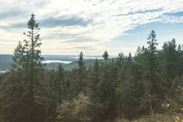 Utsikt fra toppen av Mellomkollen, mot sør. - Foto: Martin Kvist