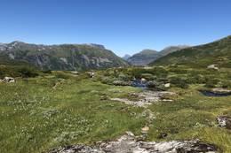 Fossheimstøylen - Foto: Anne Cecilie Kapstad