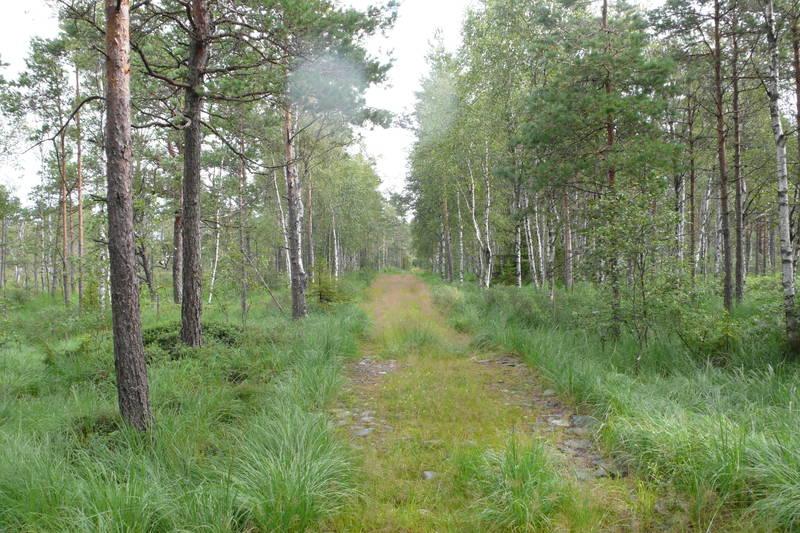 Traktorvei til Ulveholtet