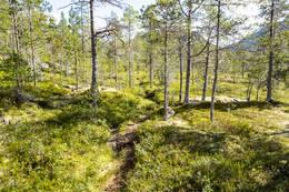 Stien er godt synlig mellom rabbene - Foto: Kjell Fredriksen