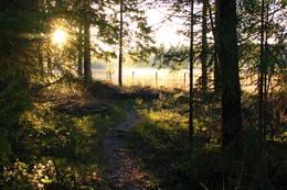 Høstlig kveldssol. Foto: Steinar Østli - Foto: Ukjent
