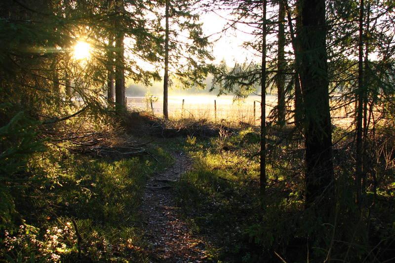 Høstlig kveldssol. Foto: Steinar Østli