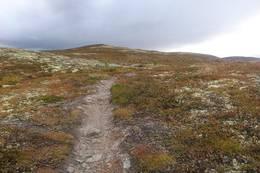 Nes Sørmark har milevis med lettgåtte stier. Her fra stien mot Trommenatten -  Foto: Lars Storheim