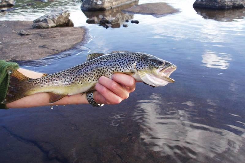Det finnes fisk i elven!