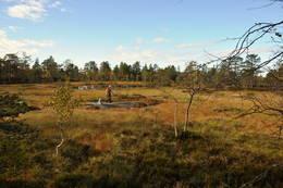 Over Vakkertjernsheia en nydelig høstdag. -  Foto: Pål Malm