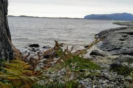 Sandvikstien - en fjellsti langs fjæra -  Foto: Harald Atle Oppedal