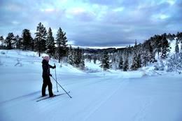Ned mot Annølstjønna -  Foto: Christian Bonvik
