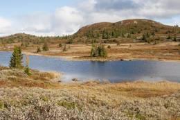 Valdreslie, mot Høgelihovda - Foto: Torbjørn
