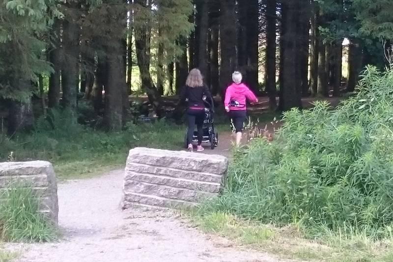 På vei inni skogholtet langs Dalabekken