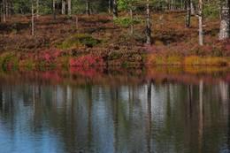 Et av vannene på Tretjernsåsen i vakker høstdrakt. -  Foto: Dagfinn Kolberg