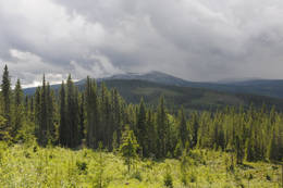 Skogsområde i Trysil - Foto: Per Roger Lauritzen