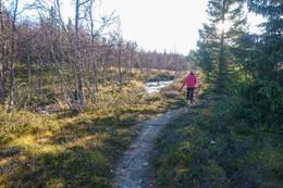 Stien går langs bekken mellom Størrtjern og Holmevann - Foto: Lars Storheim