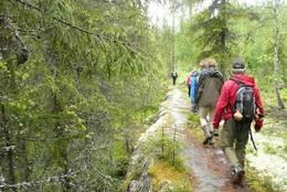 Bergrabber i skogen øst for Mesnaelva -  Foto: Frøydis Guldahl