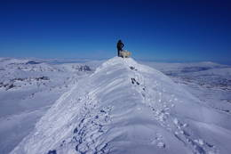 Bjørntoppen 1709 moh. -  Foto: Oddveig Torve