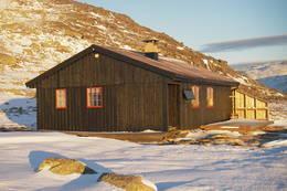 Tjørnbrotbu -  Foto: Kjell Sandåker