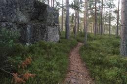 Sti - Foto: Einar Vestnes
