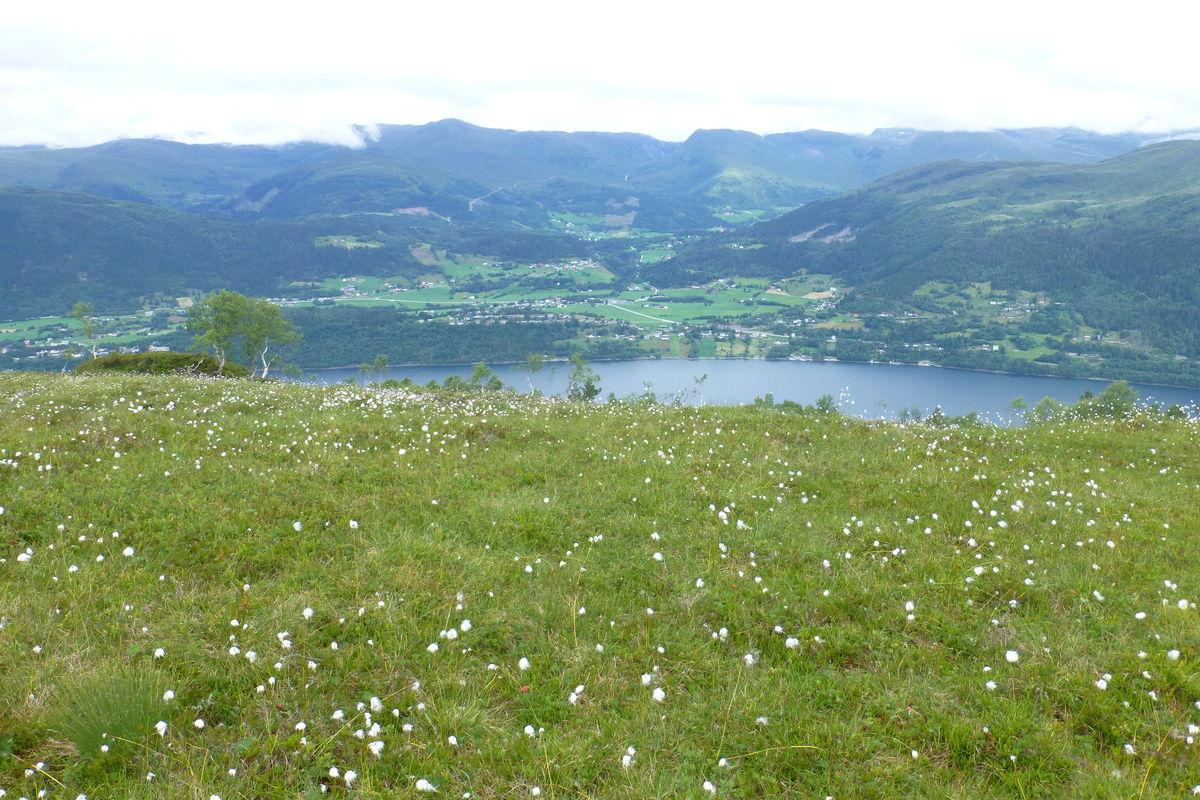 utsikt nordover til Haugen og Hjelmelandsdalen