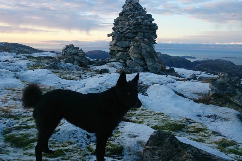 Toppen av Gjeltheia en iskald vinterdag