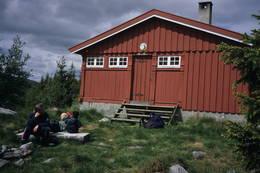 Daggrø -  Foto: Per Roger Lauritzen