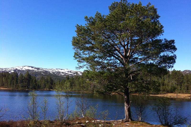 Fin rasteplass ved Røyrtjønn i Otrosåsen