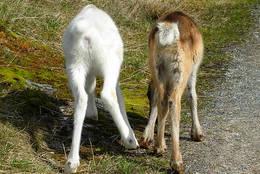 Disse to bodde på Geiterygghytta hele sommeren 2011!<br /> - Foto: Turid Eggen Hanshaugen